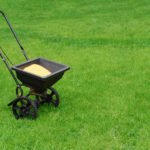 Top Tips For a Green Lawn This Spring