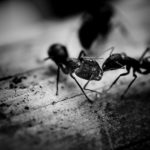 How To Control Ants In Garden