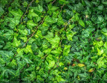 dew-fresh-garden-207355
