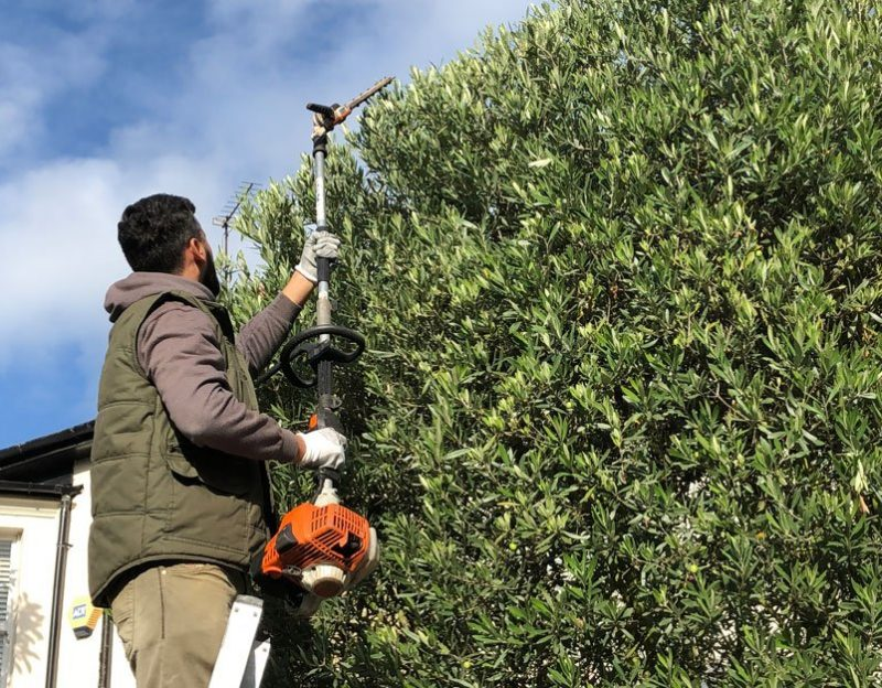 Hedge-Trimming